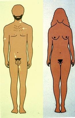 ефекти на тестостерона