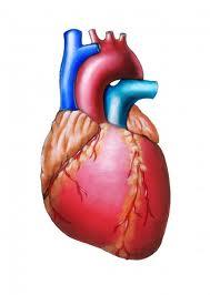 видове сърдечни болести