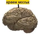 краен мозък