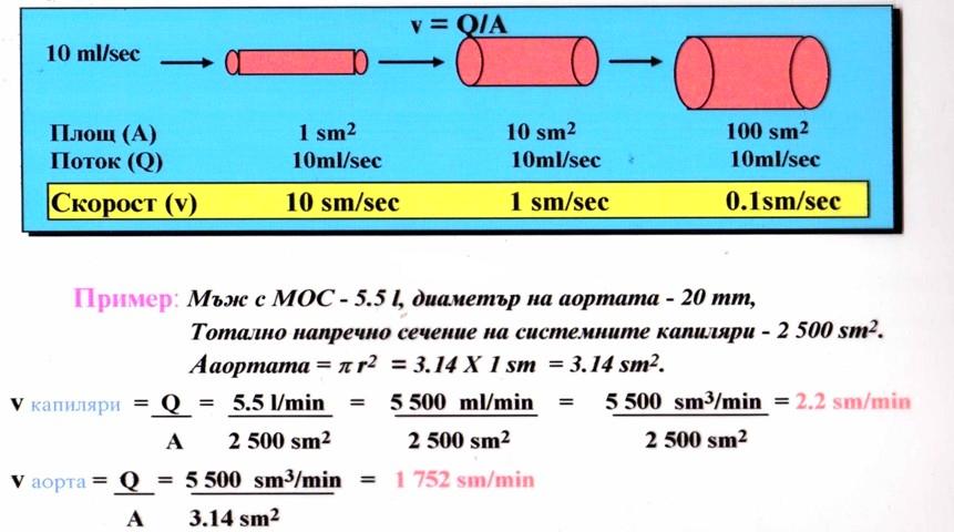 линейна скорост на кръвния поток