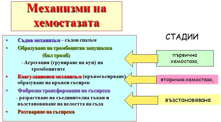 механизми на хемостазата