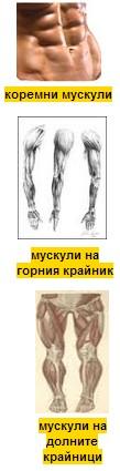 мускули на тялото