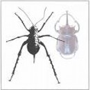 насекомо