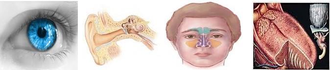 сетивни органи