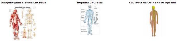 системи в човешкия организъм