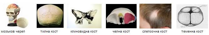 видове кости на главата