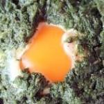 коприва с яйца
