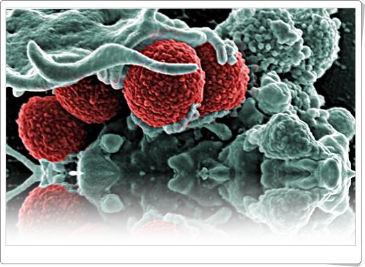 инфекция и микробиология