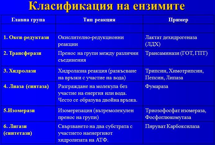 класификация на ензимите