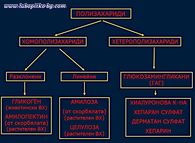 полизахариди