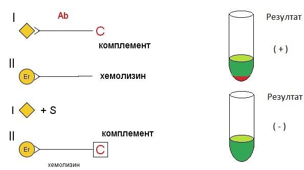 Реакция за свързване на комплемента (РСК)