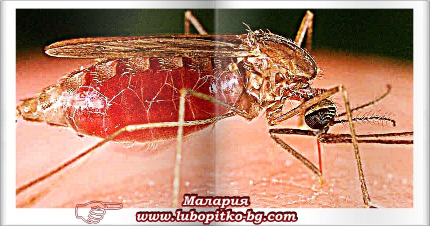 малария