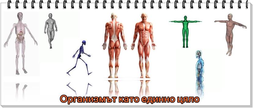 човешки организъм